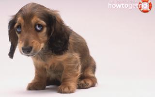 Как правильно наказывать щенка или взрослую собаку – полезные советы и лайфхаки