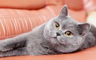 Как обработать кошку от глистов – полезные советы и лайфхаки