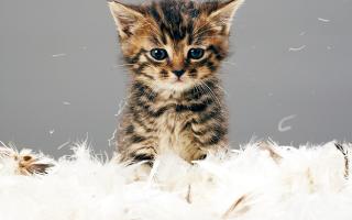 Как сделать укол кошке – полезные советы и лайфхаки