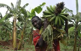 Как правильно хранить бананы – полезные советы и лайфхаки